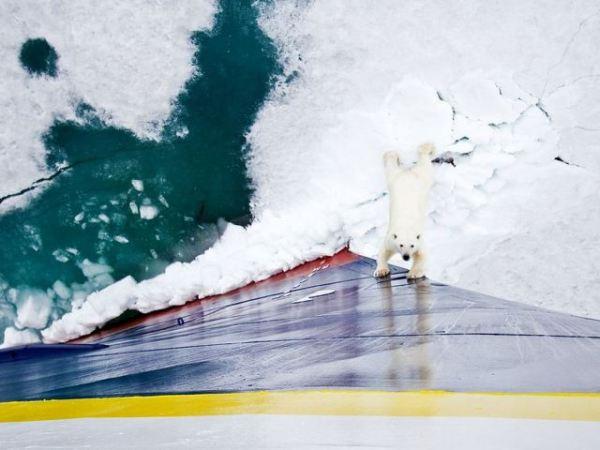 polar-bear-ship-norway
