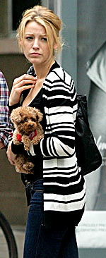 Blake Lively Small Dog