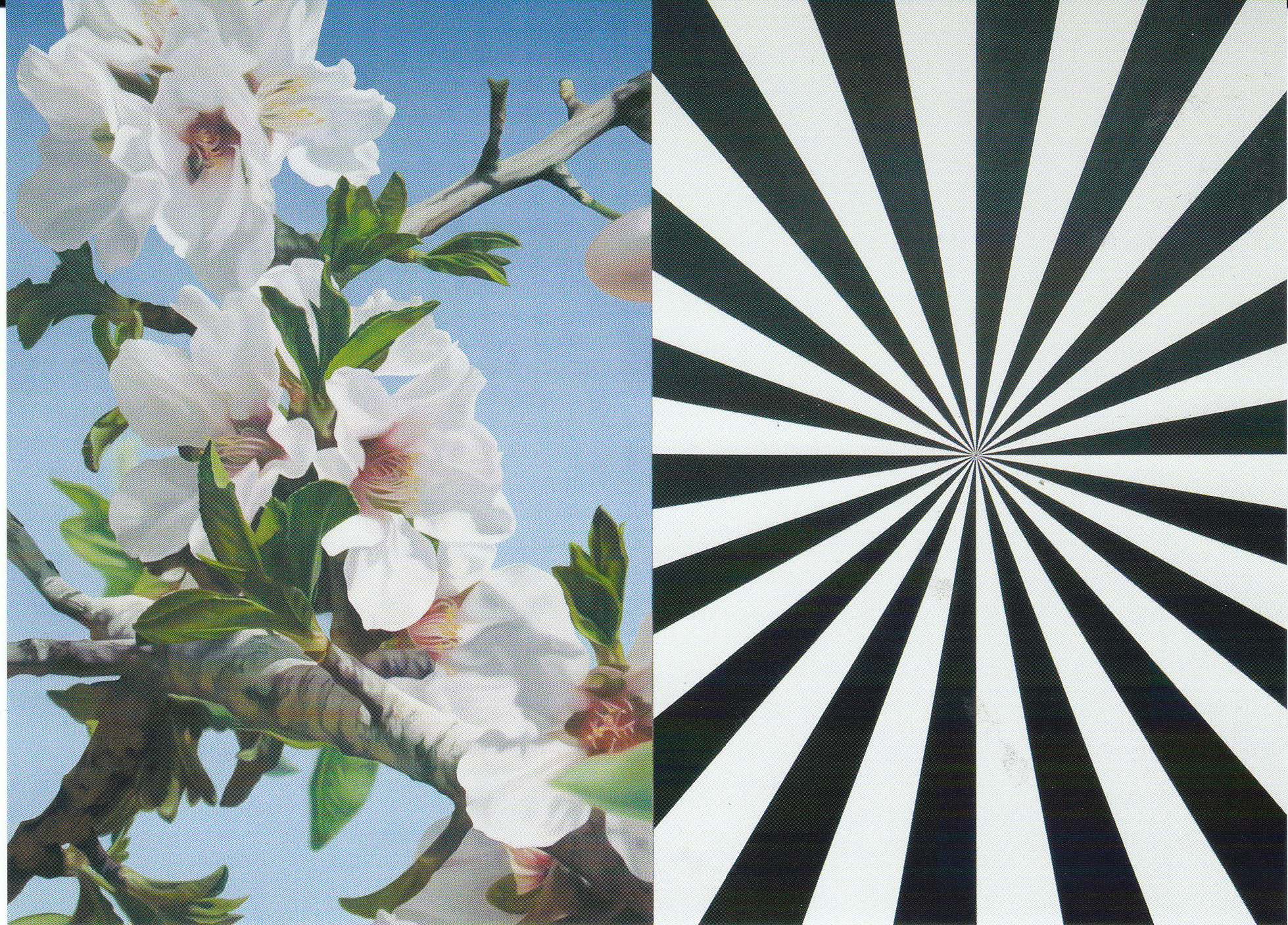 Exstacy Almond Blossom 3 (L)' by Mustafa Hulusi