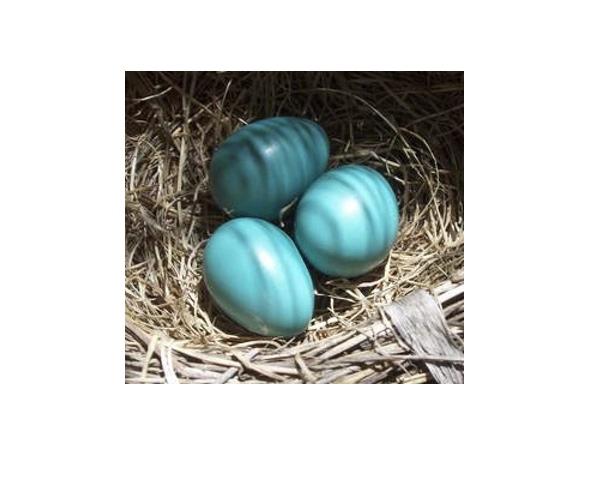 Πασχαλινα αυγα ζωγραφιστα  Μπλε