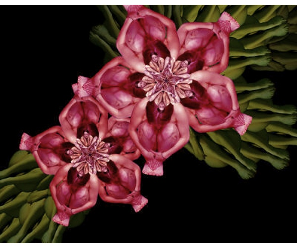 Cecelia Webber Photograph Flower nude bodies