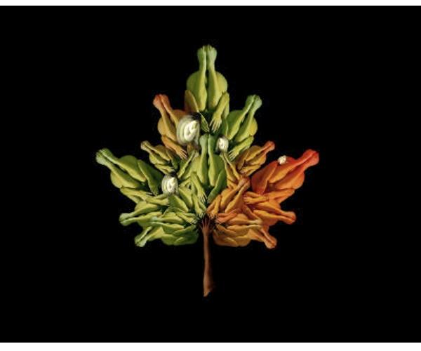 Leaf Cecelia Webber Photograph  nude bodies